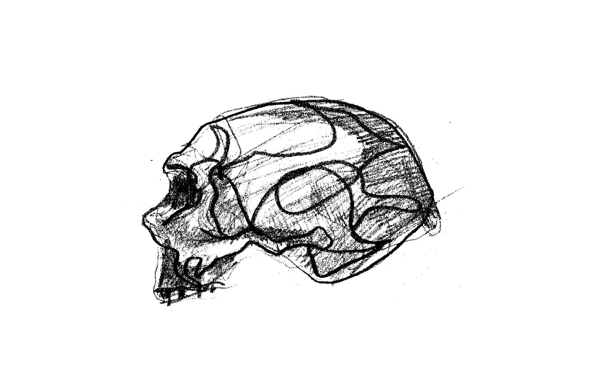 Neaderthal Skull